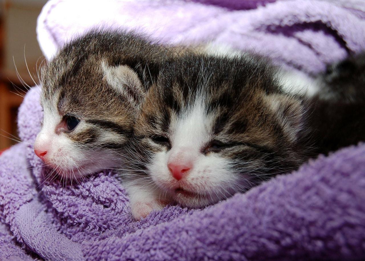 Baby Katzen in Handtuch eingewickelt