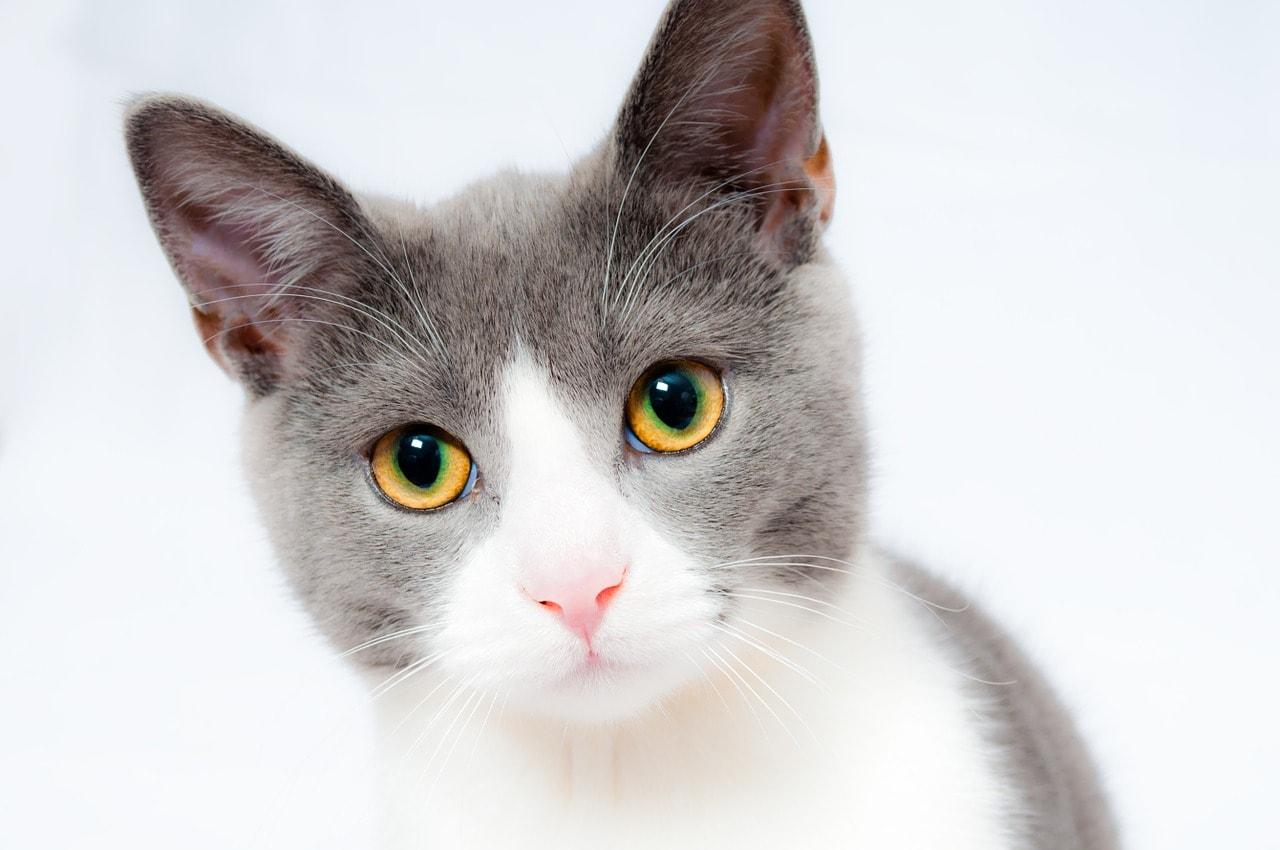 Bild Katze Schaut dich an schöne Augen