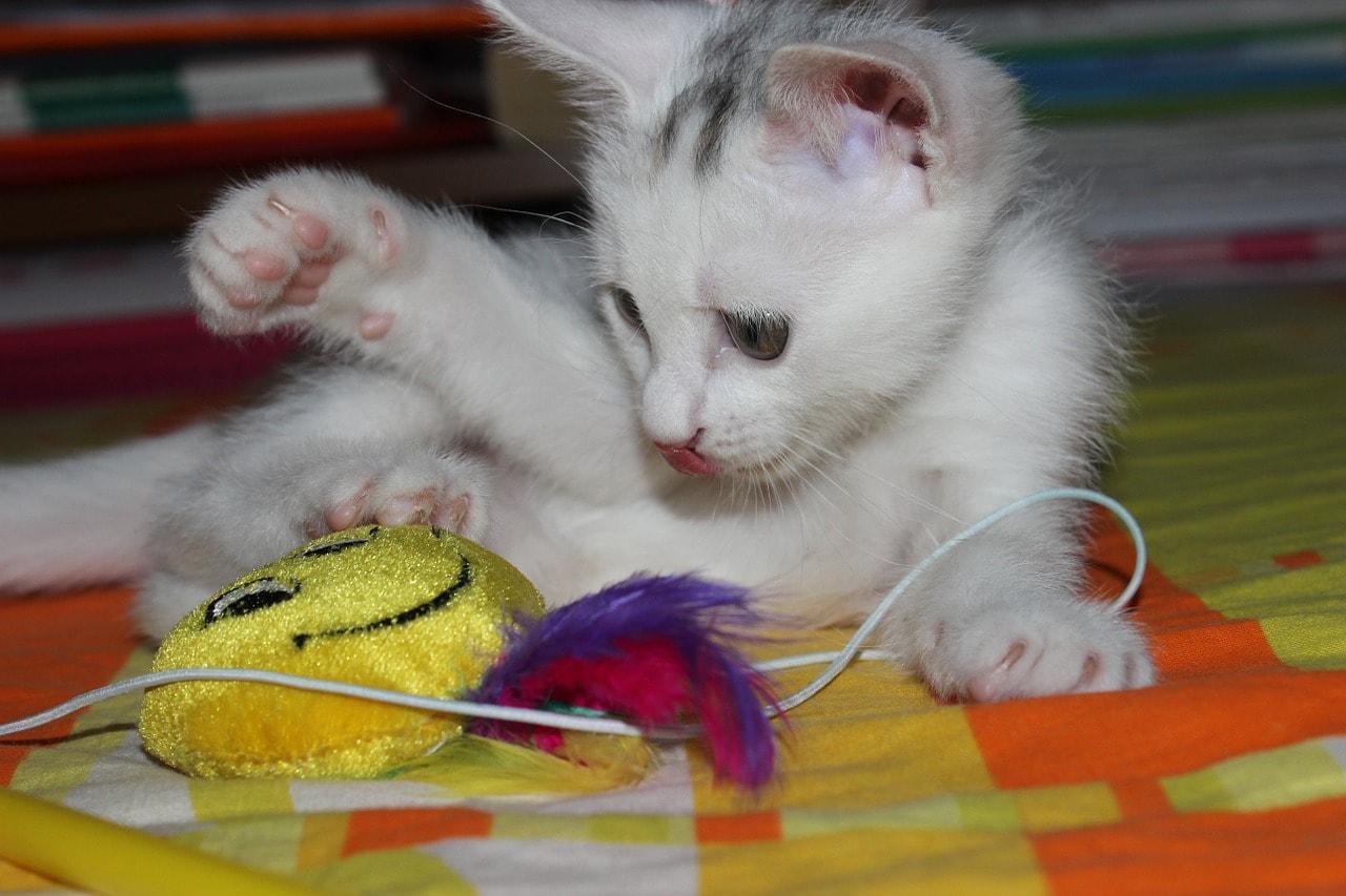 Katze spielt mit Feder Angel