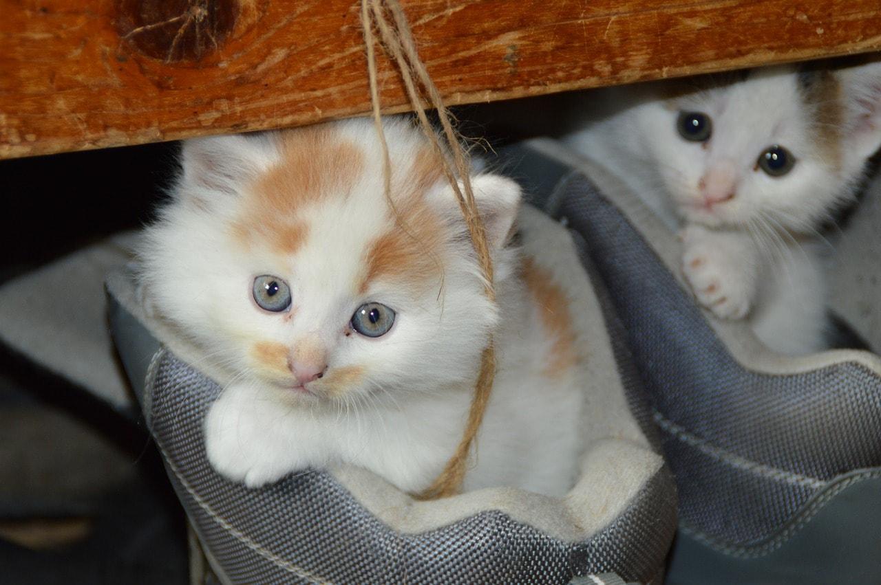 Süßes Liebes Niedliches Kätzchen