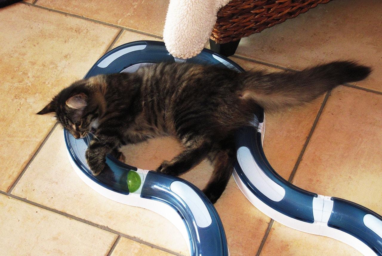 Katze Spielbahn Tipps und Tricks Beschäftigung