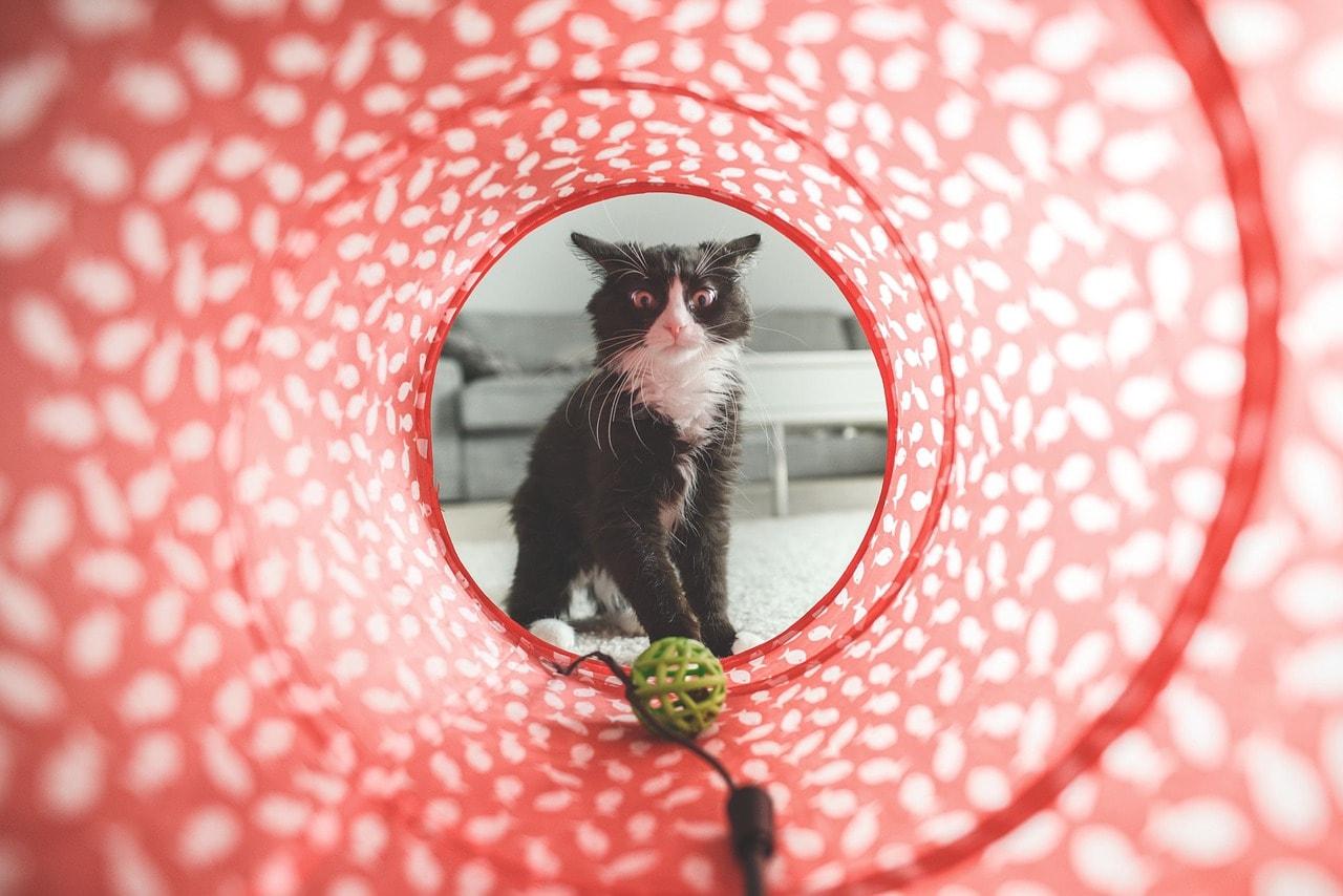 Katzentunnel und Spielball