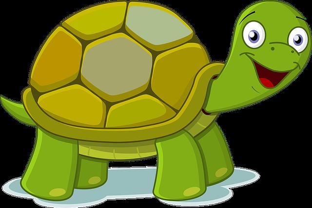 Junge glückliche Schildkröte