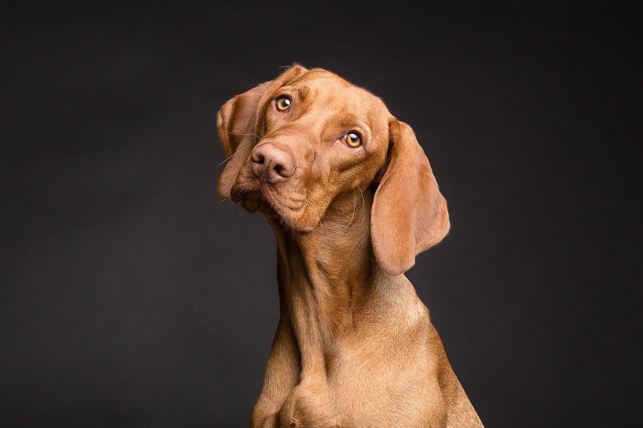 ᐅ Hunderassen Und Der Perfekte Hund ᐅ Unser Ratgeber